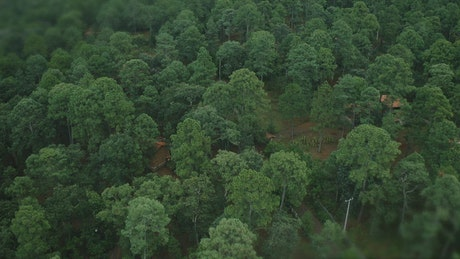 Aerial view of a forest with cabins