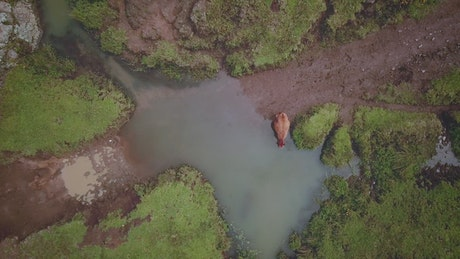 Aerial view of a muddy road with a puddle and a cow