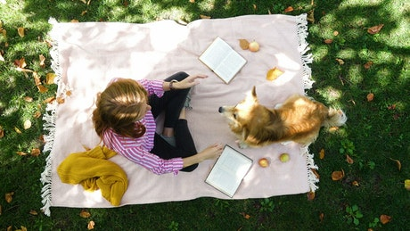 Aerial view of a picnic day with a dog