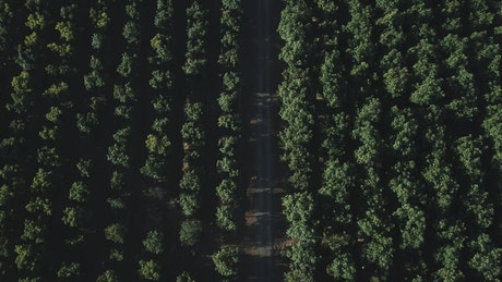 Aerial view of a road and tree tops