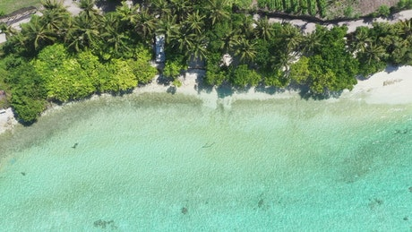 Aerial view of a tropical beach with green palms