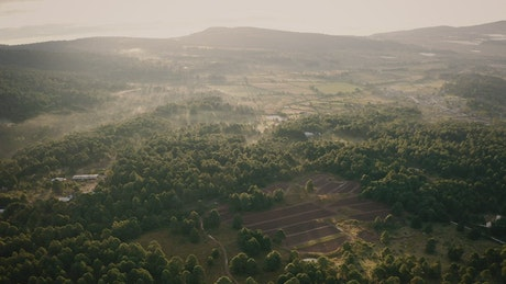 Aerial view of a wooded landscape in the morning