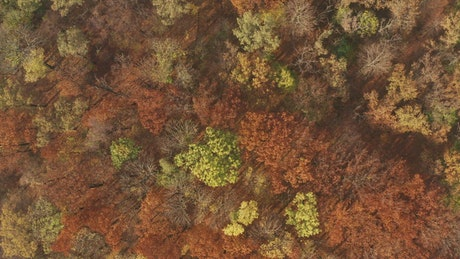 Aerial view of an autumn forest