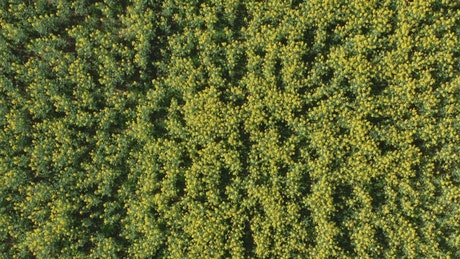 Aerial view of crops