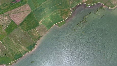 Aerial view of green crop fields by the lake