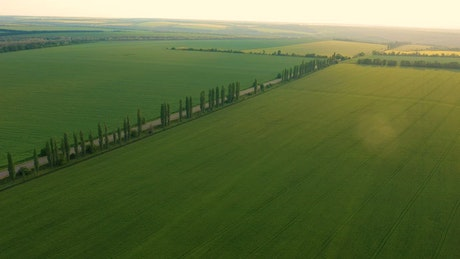 Aerial view of large agricultural green fields