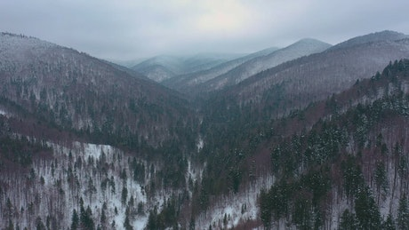 Aerial view of pine forest mountains in winter