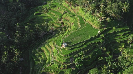 Aerial view of tiered rice paddies in Indonesia