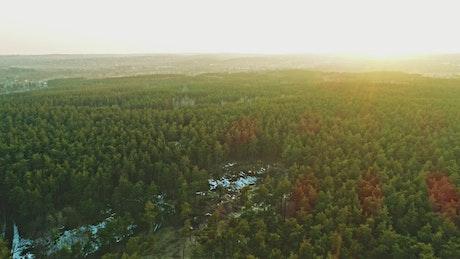 Aerial walk over a green forest full of vegetation