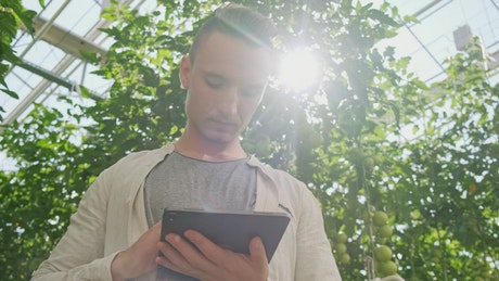 Agronomist using a tablet in the greenhouse