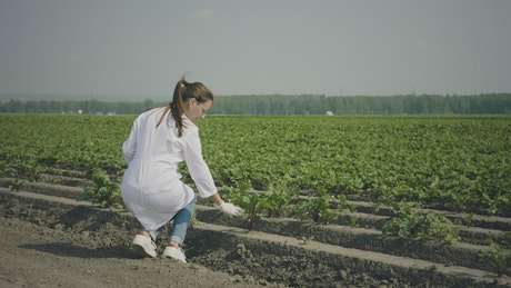 Agronomist woman checking the plants on the field