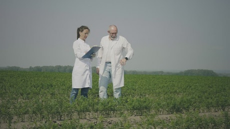 Agronomists working outdoors in the crop field