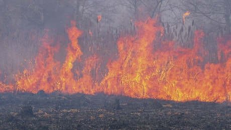 An aggressive fire consuming the nature