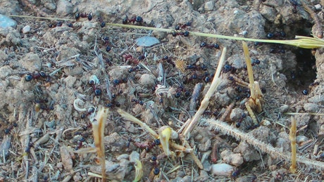 Anthill in the ground, time-lapse