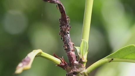 Ants swarming on a leaf