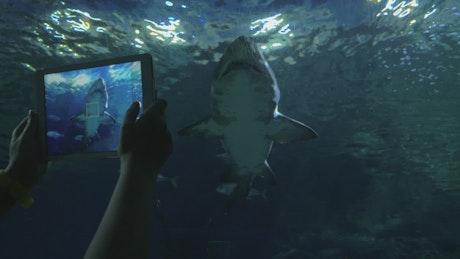 Aquarium filled with sharks