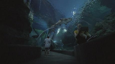 Aquarium tunnel of sharks
