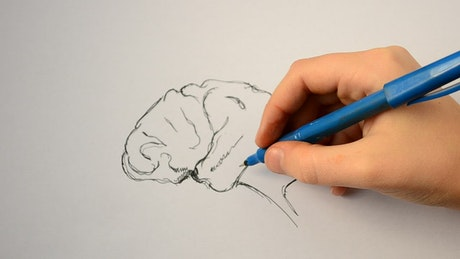 Artist drawing a human brain