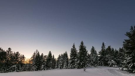 Aurora at dawn in a winter forest
