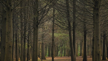Autumn forest with leafless trees