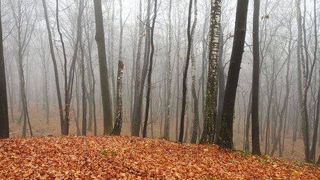 Autumn in a forest