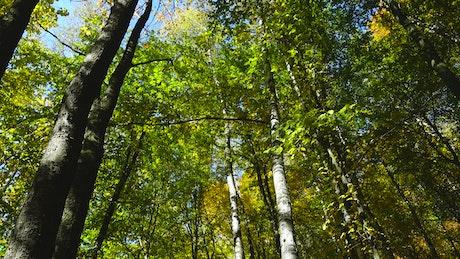 Autumn in woodland