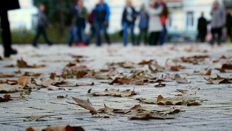 Autumn leaves and people walking in the background