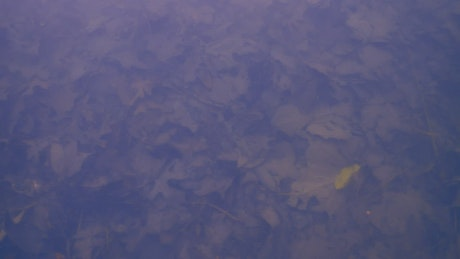 Background texture of a lake covered in fallen Autumn leaves