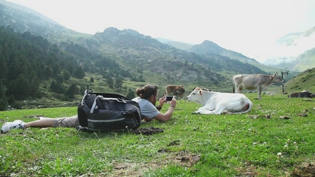 Backpacker taking photos of a calf in the valley
