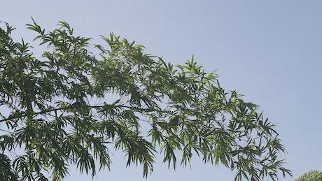Bamboo in the sun