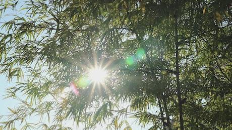 Bamboo plants blocking the sun