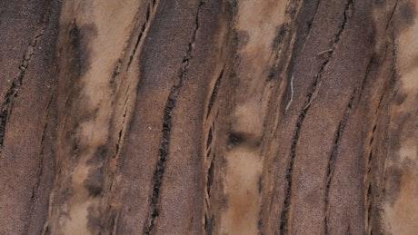 Bark of a tree, closeup