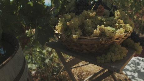 Basket full of fresh grapes