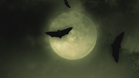 Bats and the full moon on Halloween