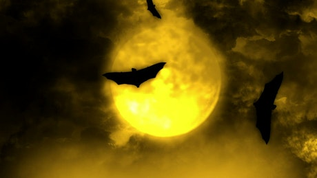Bats flying in the light of the full moon