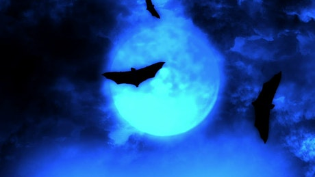 Bats flying under the blue full moon