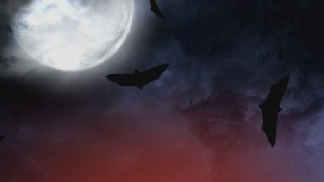 Bats on halloween
