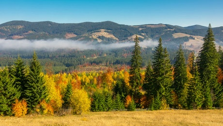 Beautiful autumn forest and the mountains