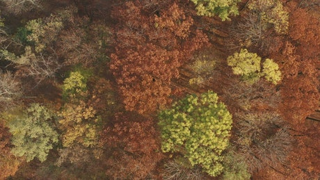Beautiful autumn forest from above
