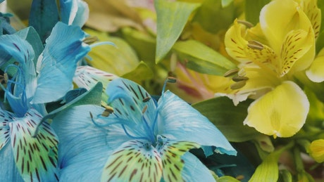 Beautiful blue and yellow flowers