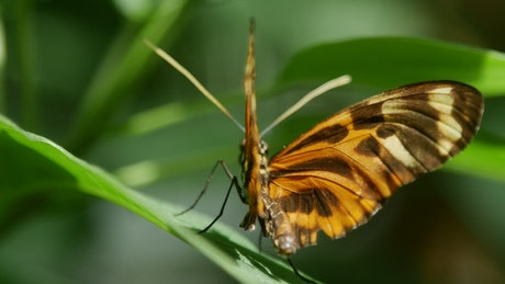 Beautiful butterfly standing on a leaf