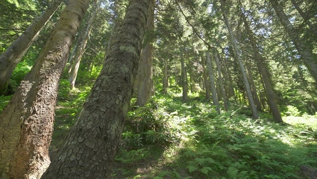 Beautiful calm green forest