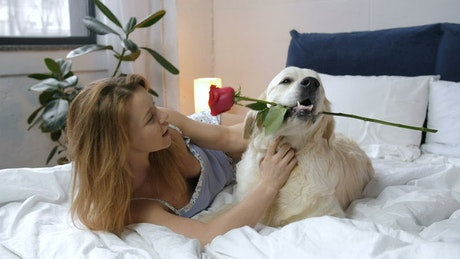 Beautiful dog and his rose