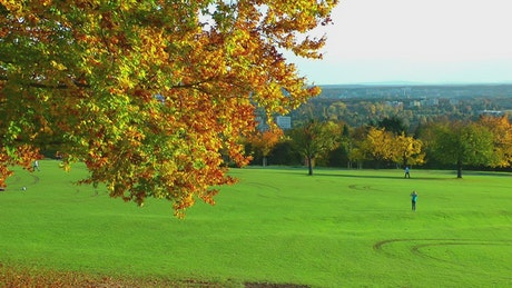 Beautiful field in a park in autumn