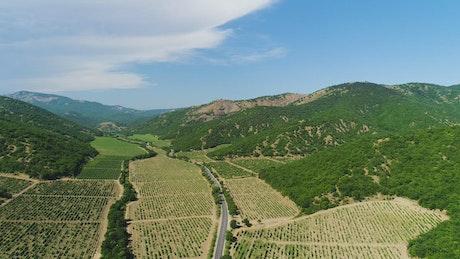 Beautiful fields of crops