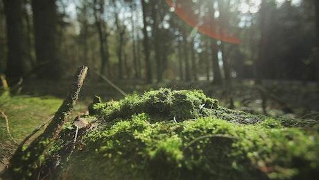 Beautiful forest floor