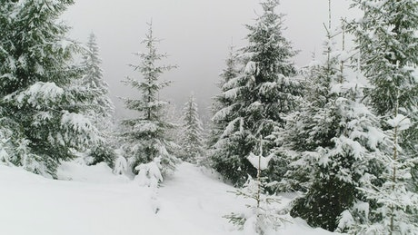 Beautiful forest in winter while snowing