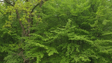 Beautiful green trees