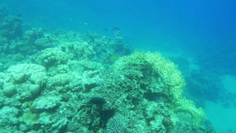 Beautiful reef full of life