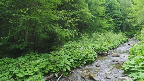 Beautiful river in a green forest, slow motion